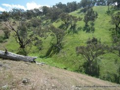 The valley contains many ephemeral streams that feed 'Watson's Creek'.
