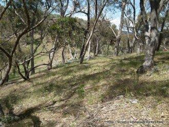 Grassy woodland in Site 7.