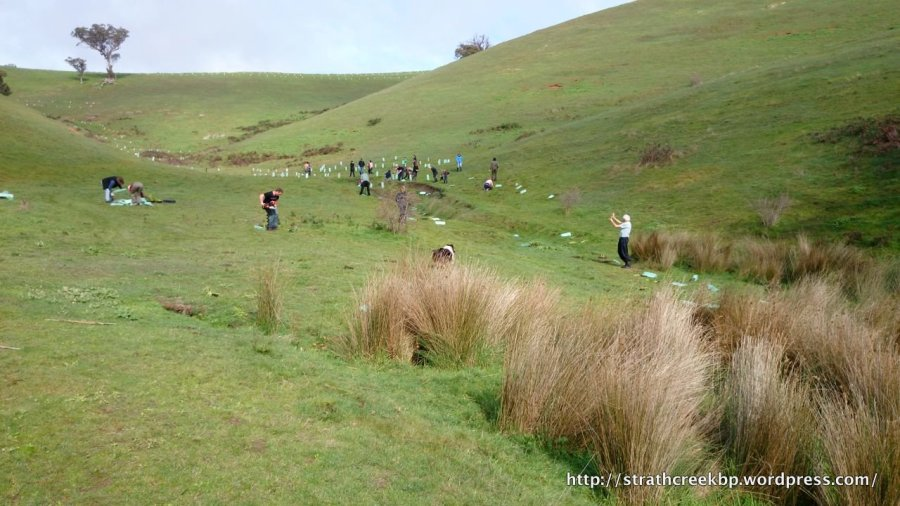 Volunteers planting an eroded watercourse at the Grady/Adshead site.